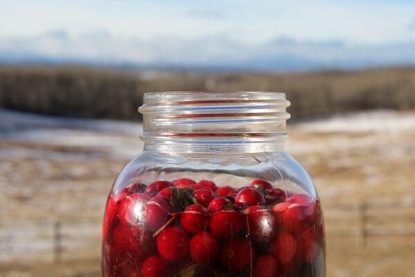 7k_ranch_barn_preserving_cranberries