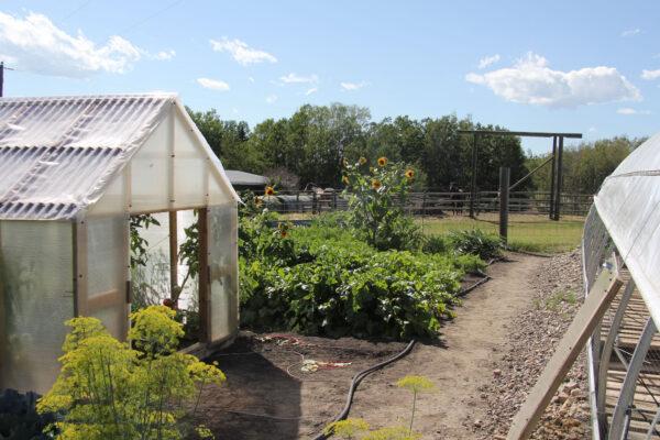 7k_small_garden_greenhouses